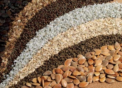Учет и переработка зерна